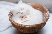 Классическая свадьба (Фото+Видео+Ведущий+Ди-джей) - от 5 часов!